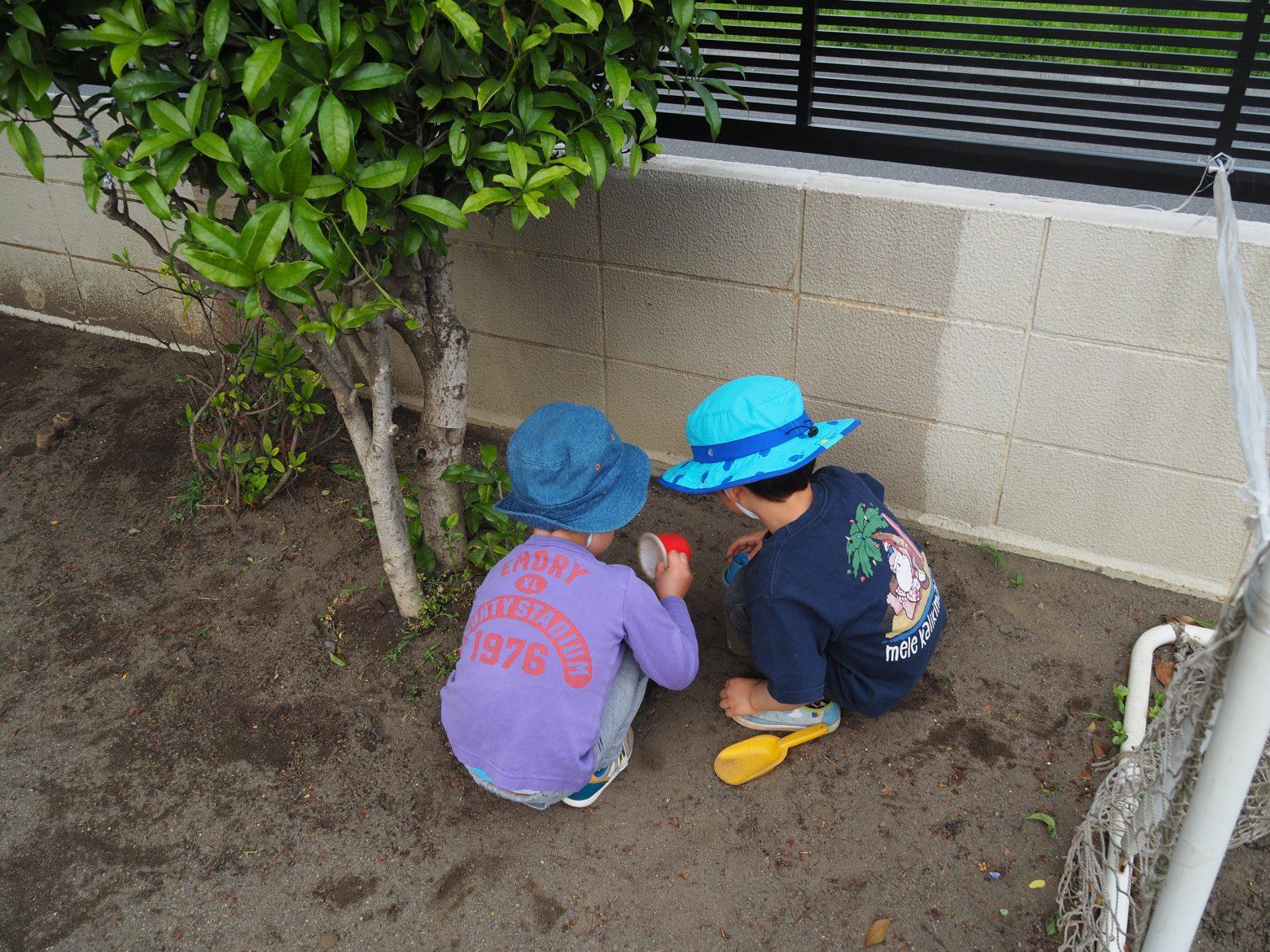 園庭で虫探し